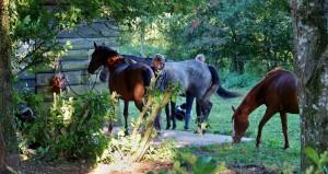 Balades à cheval proche de Castres de Toulouse et de Carcassonne