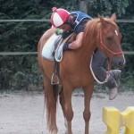 Débourrage éthologique du cheval