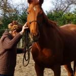 Éthologie du cheval proche de Toulouse