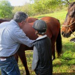 Initiation à l'éthologie du cheval