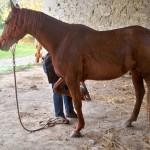 Séance éthologie du cheval