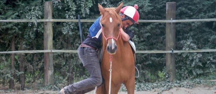 Travail comportemental avec le cheval