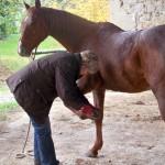 Travail comportemental du cheval
