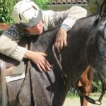 Débourrage du cheval en douceur