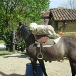 Début du débourrage du cheval après sellage