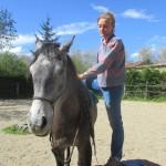 Début du débourrage du cheval en douceur