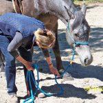 Éthologie du cheval