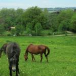 Centre équestre à Loubens-Lauragais proche de Toulouse