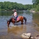 Cheval dans un lac dans la Montagne Noire