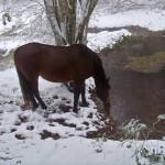 Cheval en hiver dans la Montagne Noire