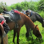 Balades à cheval dans la Montagne Noire