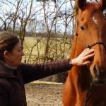 Éthologie du cheval en Haute-Garonne