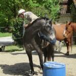 Monter en selle débourrage du cheval