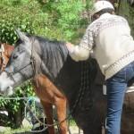 Monter en selle débourrage du cheval en douceur