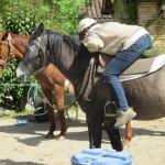 Stable en selle débourrage du cheval