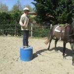Travail en rond de longe pour débourrage du cheval