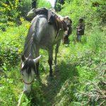 Balade à cheval en Montagne Noire