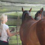 Contact avec le cheval