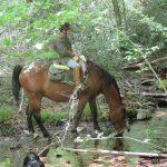 Randonnée à cheval en Montagne Noire